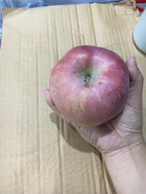 这是一张关于冰糖心苹果 纸袋 统货 80mm以上的产品图片
