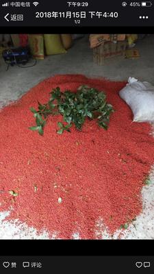 这是一张关于草珊瑚种子的产品图片