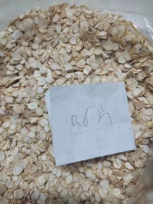 这是一张关于种植参的产品图片