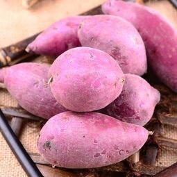 贵州省遵义市红花岗区日本紫薯王 3两~6两