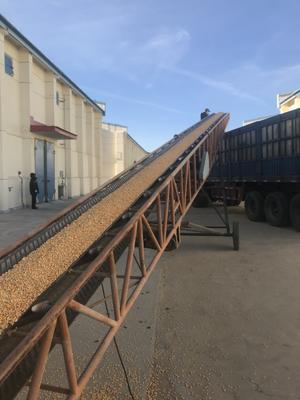 内蒙古自治区乌兰察布市凉城县玉米干粮 霉变≤1% 净货