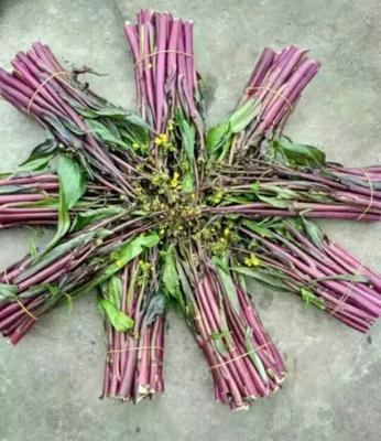 湖北省荆州市松滋市红菜苔