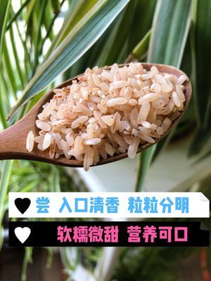 贵州省黔西南布依族苗族自治州普安县软红米
