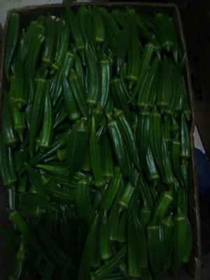 吉林省长春市二道区黄秋葵 混装通货