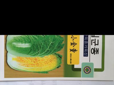 云南省昆明市官渡区娃娃菜种子