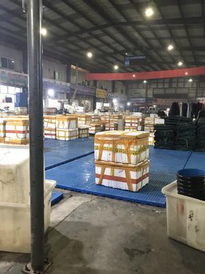 江苏省苏州市苏州工业园区高淳大闸蟹 3.5-4.0两 公蟹
