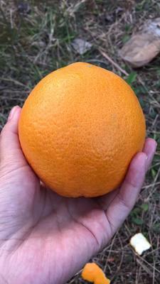 这是一张关于赣南血橙 75 - 80mm 4-8两的产品图片