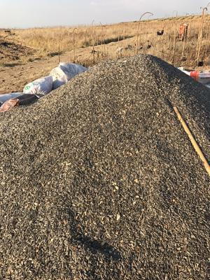 内蒙古自治区乌兰察布市察哈尔右翼中旗3638葵花籽