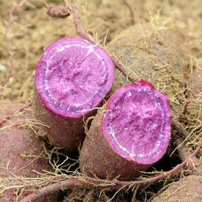 山东省临沂市蒙阴县紫罗兰紫薯 6两~1斤