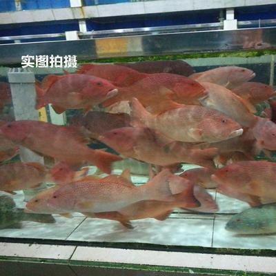 广东省深圳市南山区东星斑