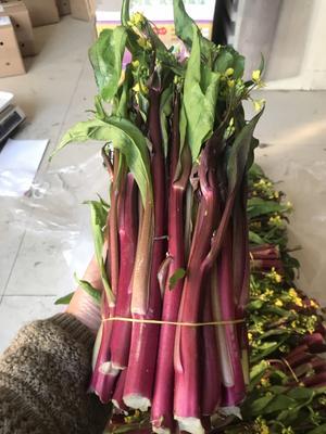 湖北省孝感市汉川市红菜苔