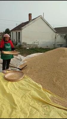这是一张关于有机黄豆 生大豆 1等品的产品图片
