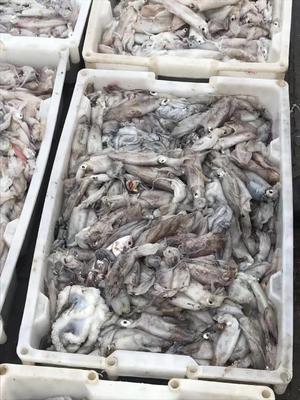 广西壮族自治区北海市海城区鱿鱼