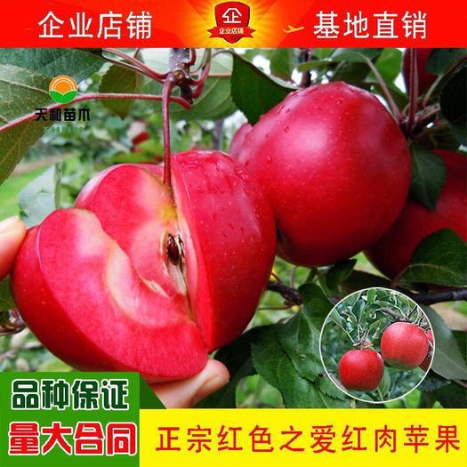 苹果树苗红色之爱品种齐全