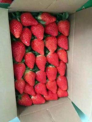 这是一张关于红颜草莓 20克以上的产品图片