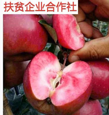 红肉苹果树苗 瑞士红色之爱119-06包纯