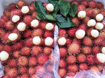 广西壮族自治区南宁市兴宁区泰国红毛丹 2cm以上