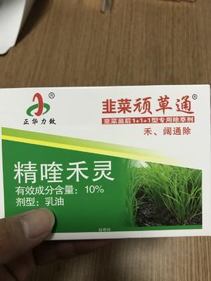 河南省商丘市梁园区韭菜根 韭菜