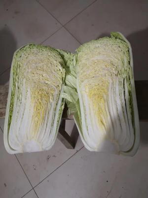 山东省泰安市肥城市黄心大白菜 3~6斤 净菜