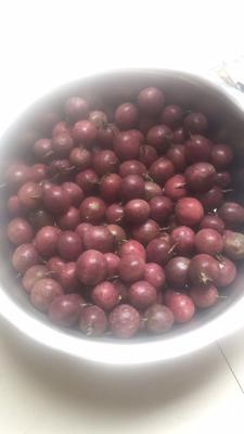 广西壮族自治区贵港市平南县紫红色百香果 80 - 90克