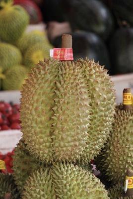 山东省聊城市东昌府区金枕头榴莲 80 - 90%以上 4 - 5公斤