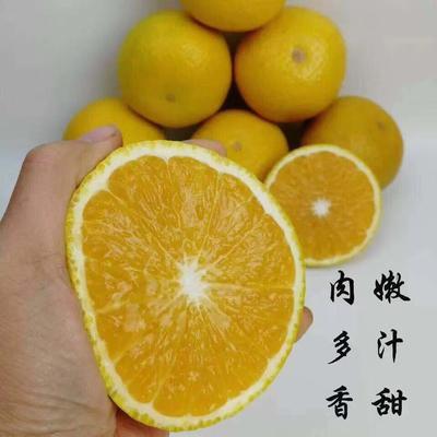浙江省丽水市庆元县甜桔柚 8cm以上 3两以上