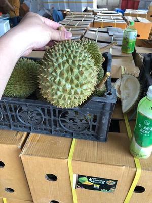 广西壮族自治区崇左市凭祥市猫山王榴莲 80 - 90%以上 2公斤以下