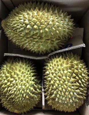 广西壮族自治区崇左市凭祥市金枕头榴莲 2 - 3公斤 80 - 90%以上