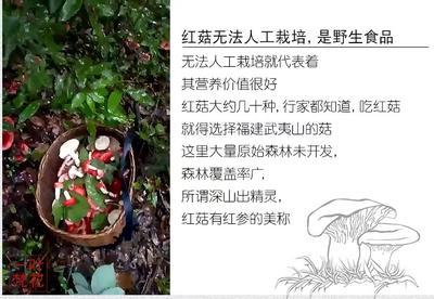 福建省三明市清流县红菇 野生 干货 未开伞