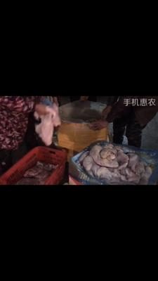 河南省信阳市平桥区猪肚