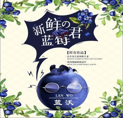 山东省临沂市临沭县蓝丰蓝莓 12 - 14mm以上 鲜果