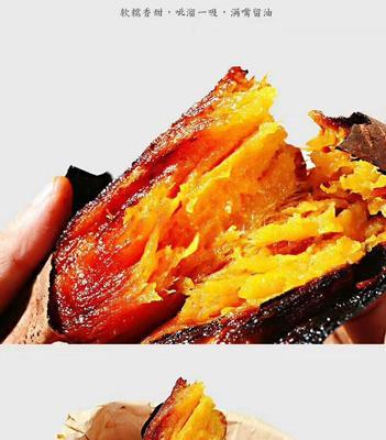 陕西省西安市临潼区烟薯25号红薯苗 25~35cm