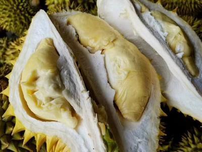 广西壮族自治区崇左市凭祥市金枕头榴莲 2公斤以下 80 - 90%以上