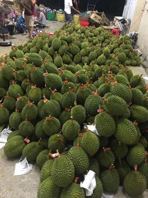 广西壮族自治区贵港市港北区金枕头榴莲 16公斤 60 - 70%以上