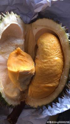 广东省深圳市南山区马来西亚巴掌猫山王 30 - 40%以上 2公斤以下