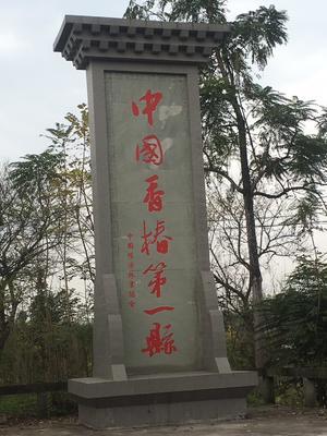 四川省达州市大竹县红油香椿苗 2公分以下