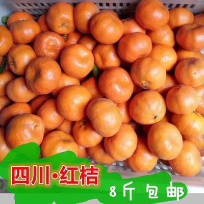四川省成都市金牛区红桔 5.5 - 6cm 1.5 - 2两