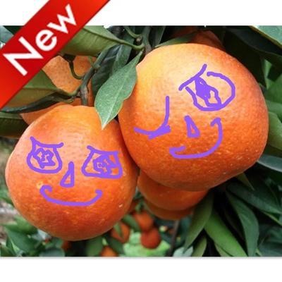 这是一张关于血橙 65 - 70mm 4两以下的产品图片