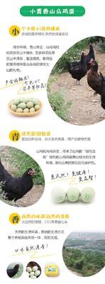 这是一张关于乌鸡蛋 食用 箱装的产品图片