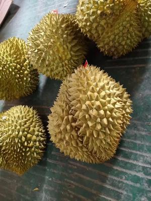 广西壮族自治区贵港市港北区金枕头榴莲 90%以上 16公斤