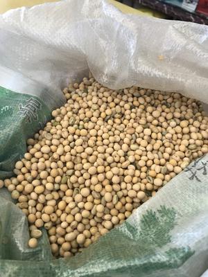 黑龙江省大兴安岭地区塔河县东北黑龙江大豆 3等品 生大豆