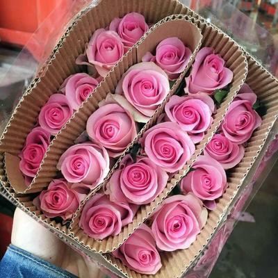 云南省昆明市五华区粉色玫瑰苗