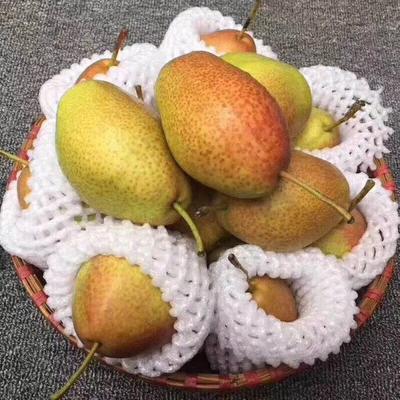 陕西省西安市雁塔区红香酥梨