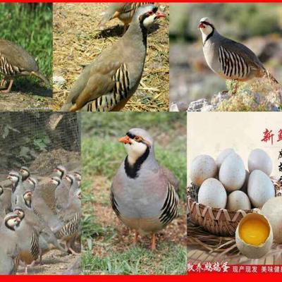 山东省济宁市任城区鹧鸪蛋 孵化 箱装