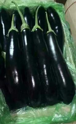 山东省青岛市莱西市绿长茄 20~30cm 长茄