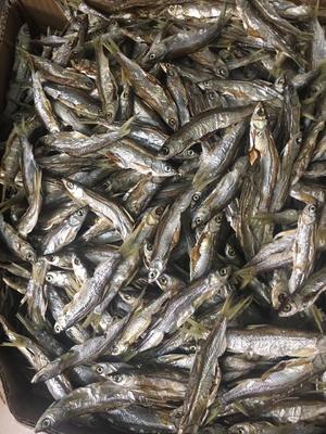 这是一张关于白条鱼 3-4公斤 野生的产品图片
