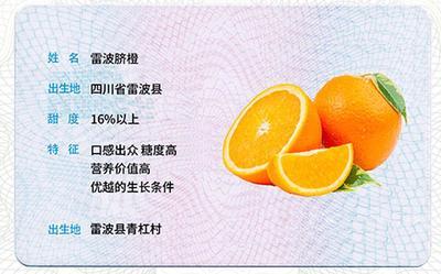 这是一张关于雷波脐橙 4-8两 85-90mm的产品图片