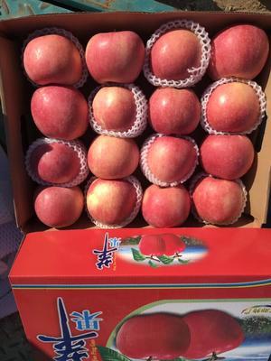 北京顺义区红富士苹果