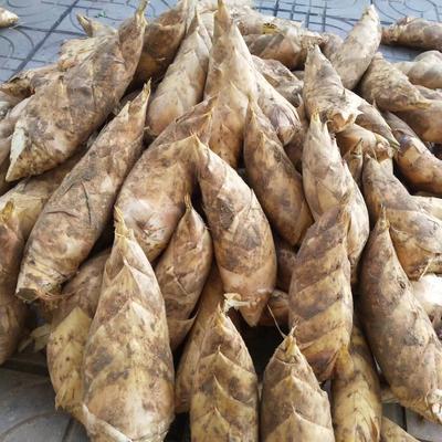 安徽省合肥市蜀山区冬笋 9~13cm 鲜笋