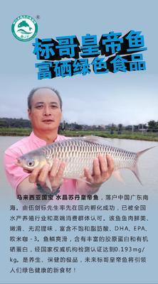 广东省佛山市南海区盐鲜苏丹鱼